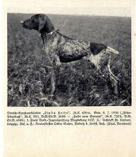 Deutsch-Kurzhaarhündin Lipsia Heida Fr.Lindner Leipzig Prämiert 1937