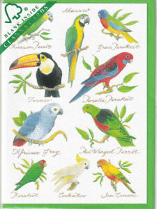 Tropical Birds Greetings Card birthday Richard Partis Clanna Cards parrots macaw