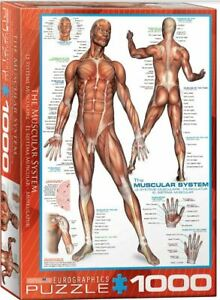 EuroGraphics 1000 piece jigsaw puzzle THE MUSCULAR SYSTEM human body science