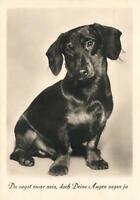 1941 VINTAGE SWEET MATTE PHOTO of DACHSHUND POSTCARD - USED
