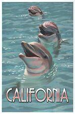 Dolphins in California, Sea Animals, Ocean Mammals, Porpoise - Modern Postcard