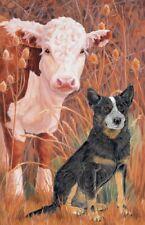 Australian Cattle Dog Blank Note Card
