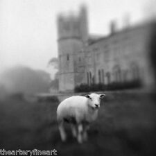 KEITH CARTER 'Birth of Photography (Lacock Abbey)' 2004 SIGNED Photograph ed. 25