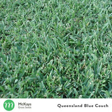 McKays Queensland Blue Couch Blend Grass Seed - 1kg - Lawn Seed Free Postage