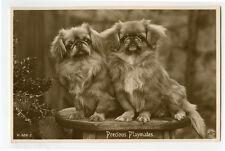 c 1920 British Photo Postcard PRECIOUS PLAYMATES Pekingese Pups Vintage