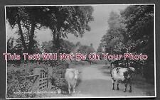 ES 104 - Drinkwater Farm, Bradwell, Essex - 6x4 Photo