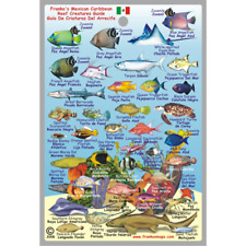 Franko Maps Mexican Caribbean Reef Creature Guide 4 X 6 Inch