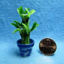 Dollhouse Miniature Bamboo Plant in Floral Pot ~ FP03-B