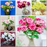 10 Pcs Seeds Desert Rose Flowers Bonsai Adenium Plants Mini Potted Tree Garden