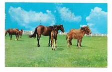 Vintage Animal Chrome Postcard Quarter Horses in Pasture White Fence