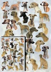 Whippet Dog Gift Wrapping Paper By Starprint - 1 sheet plus matching gift card