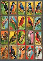 1925 ITC C14 Game Bird Series Tobacco Cards Complete Set of 30