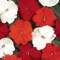 Impatiens Seeds 25 New Guinea Impatiens Divine Salsa Mix