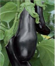Organic Vegetable - Aubergine - Black Beauty - 150 Seeds