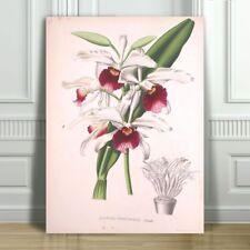 "JEAN LINDEN - Beautiful Purple Orchid #3 - CANVAS ART PRINT POSTER - 18x12"""