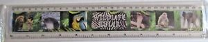 RULER PLASTIC 30cm WILDLIFE ANIMAL PICTURES ON FRONT AND THEIR TEXT ON REVERSE
