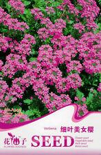 1 Pack 30 Verbena Seeds Verbena Tenera Erbena Tenera Garden Flowers A242