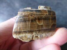 DERBYSHIRE OAKSTONE  (76.6 grams / 53 mm) PART POLISHED SPECIMEN  (25) (BARYTE)