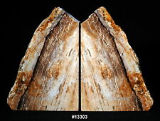"Exquisite Petrified Wood Bookends 11 5/8"" wide 8 1/4"" high 2 1/8"" thick 12.2 lbs"
