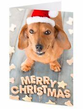 Dachshund Christmas card 'Merry Christmas' sausage dog santa claus