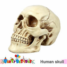 Life Size Human Skull Anatomical Deluxe Head Skeleton Anatomy Teaching Model