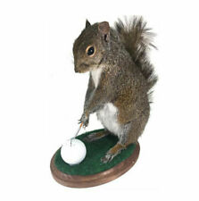 Golfing Squirrel Professional Taxidermy Mounted Animal Statue Home Gift
