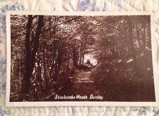 Vintage Post Card Of Stinchcombe Woods, Dursley. Postally Unused. Country Scene.