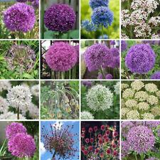 Allium Full Sun Bulbs, Corms, Roots & Rhizomes
