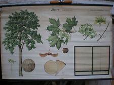 Crocifissi Immagine Muro Immagine immagine acero ACER legni nazionali legno da tavola VII 118x77