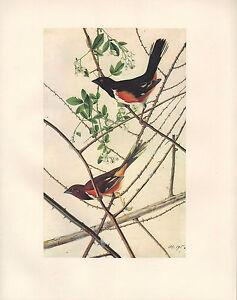VINTAGE JOHN JAMES AUDUBON BIRD PRINT ~ RUFOUS-SIDED TOWHEE MALE & FEMALE