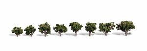 Woodland Scenics 3/4In - 1 1/4In Sun Kissed 8/Pk *, #WS-TR3501