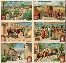 Chromo Liebig Sang. 585 ITA Cuba ANNO 1899