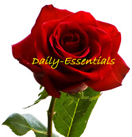 Rose Essential Oil 100%  Pure & Natural Therapeutic Aromatherapy,10ml