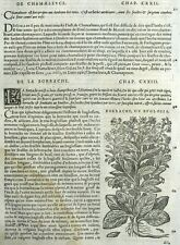 Buglosse Bourrache Gravure Botanique Matthioli Mattioli Matthiole Dioscoride