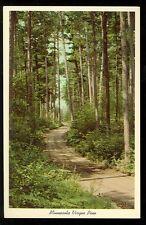 Scenic Trail Through Minnesota Virgin Pine (unused(Trees415