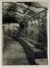 Real Photo, Grapes in Garden in Funchal, Madeira, taken during NDL cruise,1930s