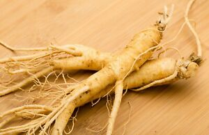 Panax Ginseng Viable Seeds - Asian Medicinal Wild Plant Nutrition - UK Stock -