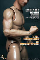 """ZC Toys 1/6 Scale Muscular Wide Shoulder Figure Body For 12"""" Hot Toy Headsculpt"""