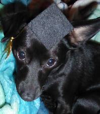 Small Dog / Cat Graduation Cap Dog Graduation Hat elastic Strap Handcrafted