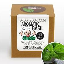 Plants From Seed - Grow Your Own Basil Plant Kit