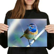 A4 - Colourful Small Bird Garden Poster 29.7X21cm280gsm #24523