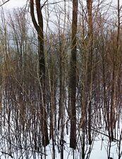 1950's Vintage NATURE LANDSCAPE Winter Snow Forest Photo Art 16x20 ELIOT PORTER