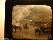 le Mont Doré .Auvergne .plaque en verre . positif . scène de vie . ânes