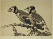 CHARLES E. HEIL BIRDS ETCHING YOUNG BLUE JAYS SIGNED 1920s
