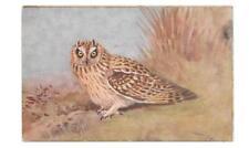 POSTCARD BIRDS  SHORTEARED  OWL -  ASIO FLAMMEUS - ARTIST ROWLAND GREEN
