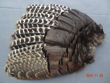 "Wild Turkey Feathers Secondary ""Left"" Wing Gobbler Fan"