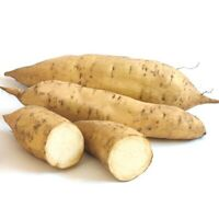 White Skin White Flesh Sweet Potato x5 Unrooted Plants/ Stem Cuttings