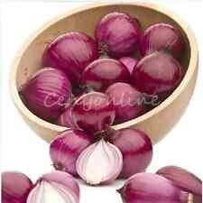 100pcs Red Onion Seeds Brunswick Heirloom Tasty Vegetable Home Garden Planting