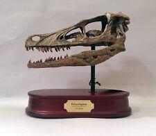 Velociraptor Dinosaur Skull Replica 1/1 Scale (Life Size)