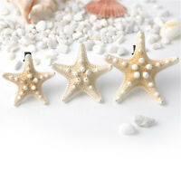 Lovely Hot Lady Girls Sweet Nice Starfish Beach Sea Star Hairpin Hair Clip one